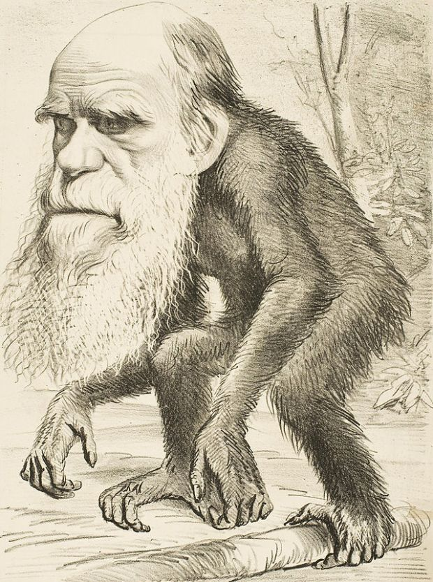 editorial_cartoon_depicting_charles_darwin_as_an_ape_1871