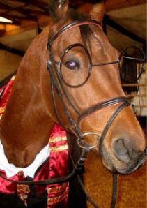 cavallo senatore