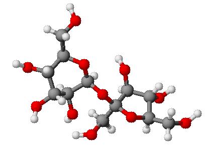 Molecola_saccarosio_modello