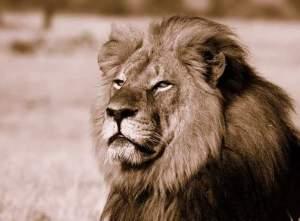 Cecil, webpicture