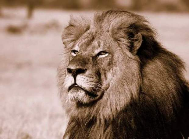 Cecil, webpicture