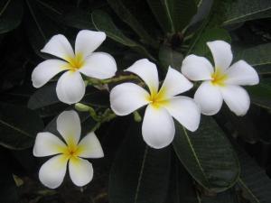 leelawadee-flower-3990.prev