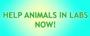 wwail-cute-blog-petition-button
