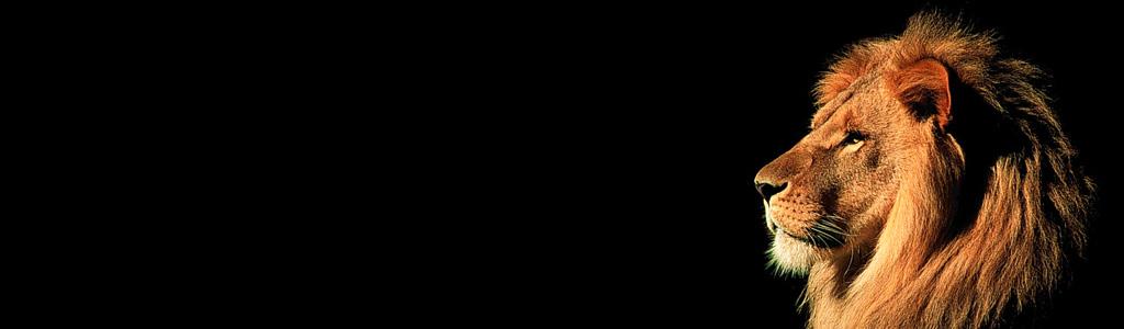 african-lion-header