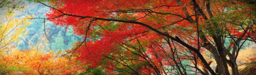 charming-autumn-forest-website-header