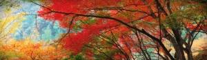 charming-autumn-forest-website-header