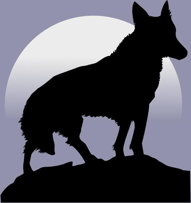 wolf-47329_960_720