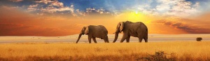 elephants-in-the-distance-sunset-landscape-website-header