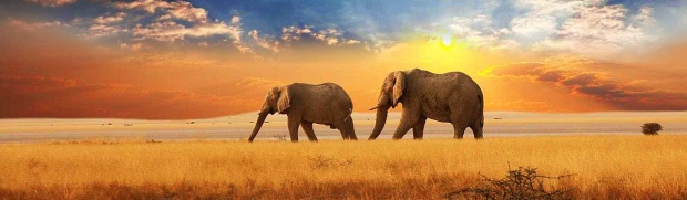 elephants-in-the-distance-sunset-landscape-website-header