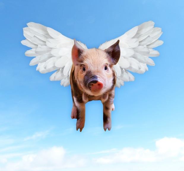 pigs-1520968_960_720