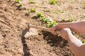 agricoltura-giovanile