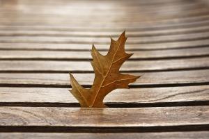 leaves-1087952_960_720