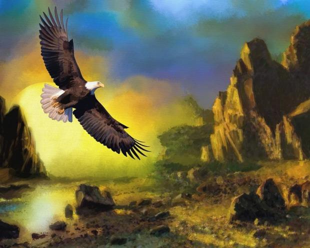 eagle-772480_960_720