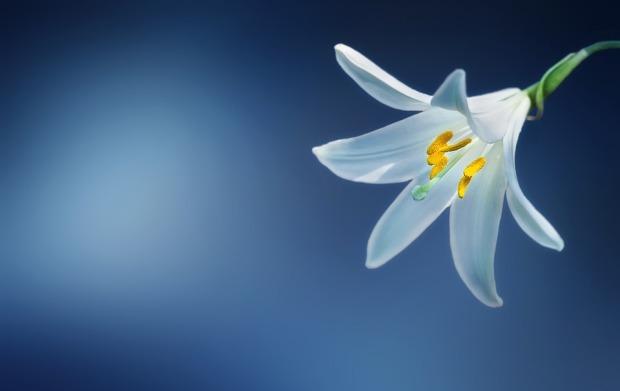 flower-729514_960_720 (1)
