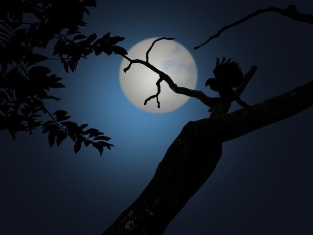 night-1629980_960_720
