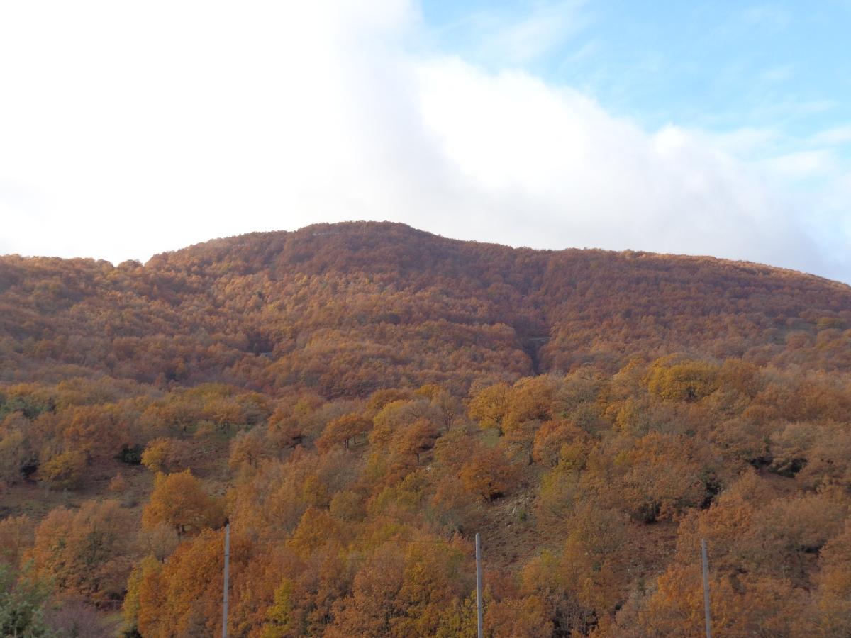 Colori e sapori in una meravigliosa Ogliastra d'autunno....
