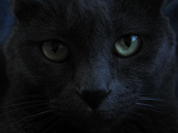 cat-746242_960_720