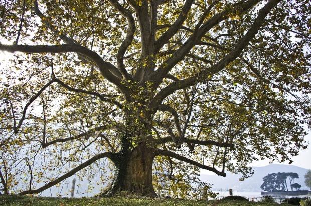 tree-1189889_960_720.jpg