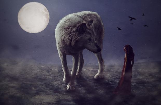 wolf-3033479_960_720