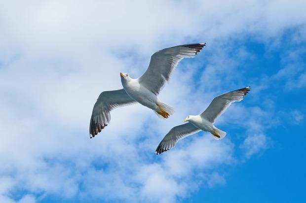 seagull-2394636_960_720.jpg