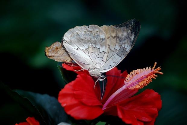 butterfly-23000_960_720.jpg