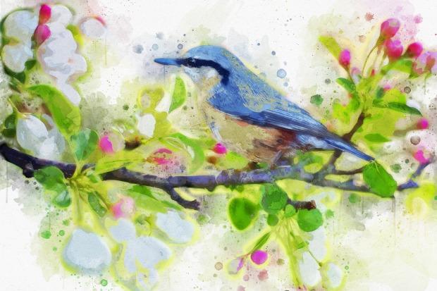spring-bird-2851893_1920